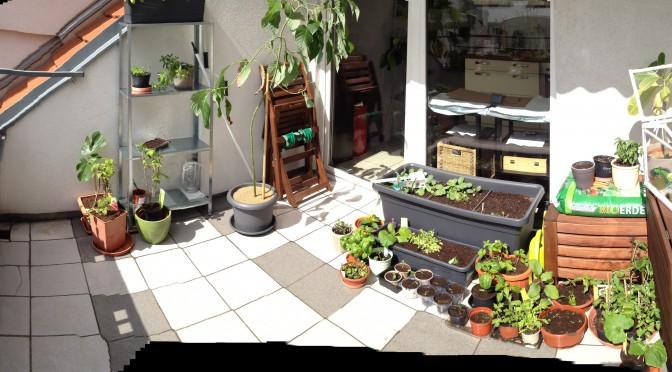 Aliciouslife: My Balcony Garden – Plans for 2015