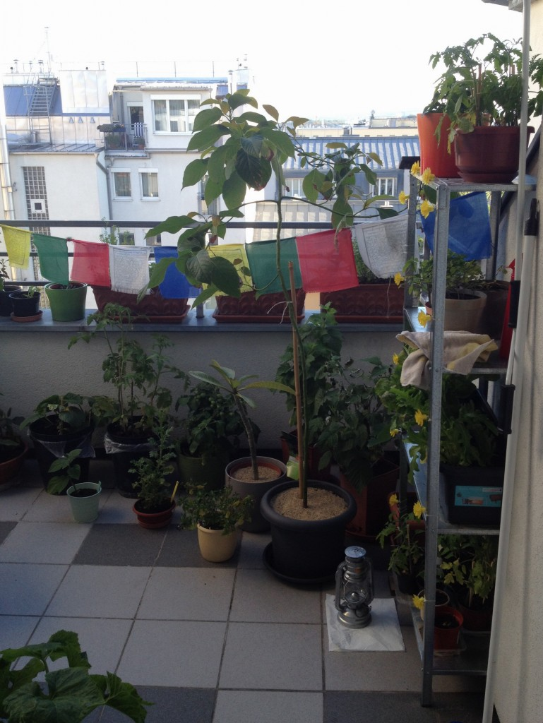 Balcony garden 2014: Everything's growing.