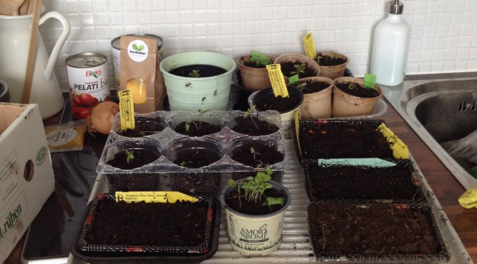 Aliciouslife: Balcony garden – How are we coming along?