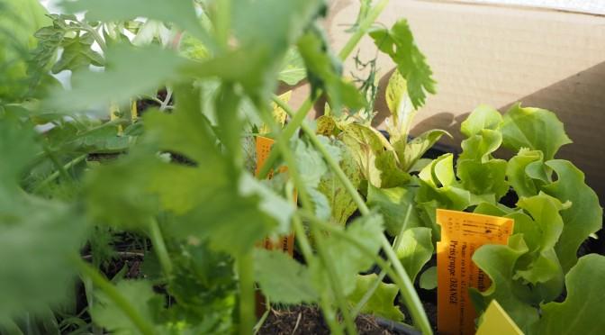 Aliciouslife: My Balcony Garden – The Haul