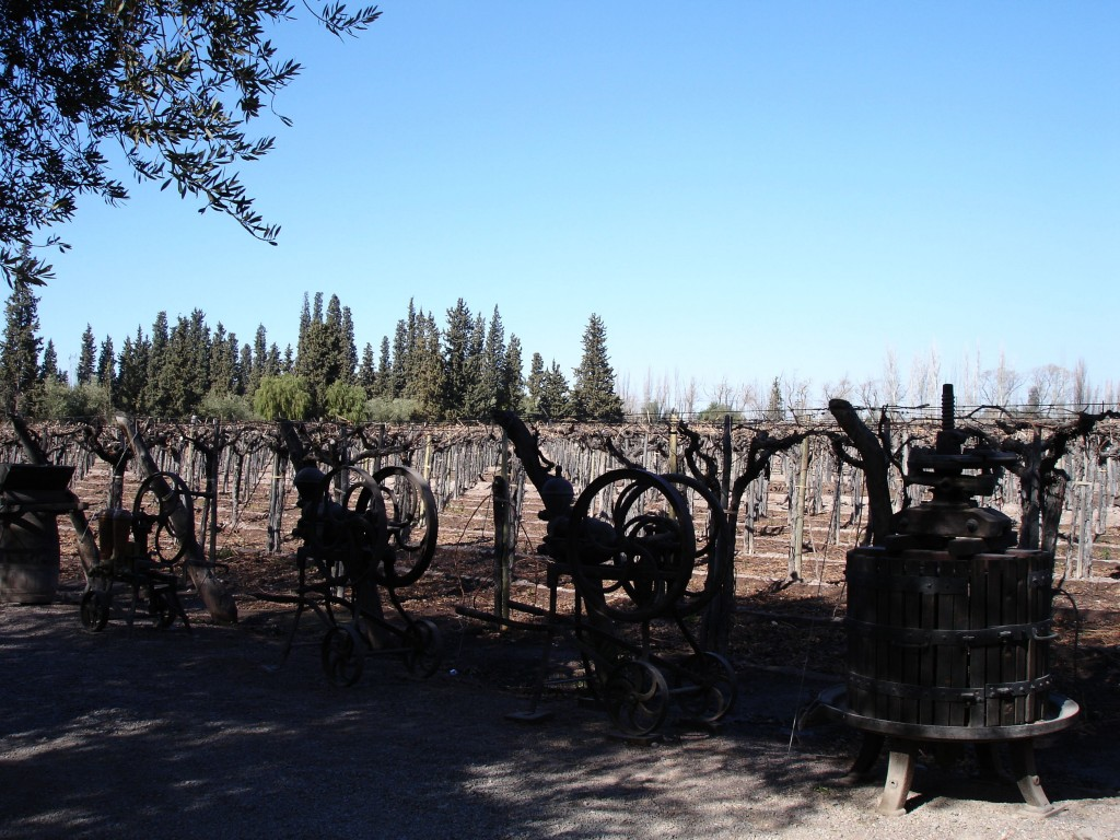 One of many Mendoza vineyards I visited