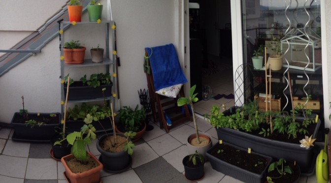 Aliciouslife: My Balcony Garden – Getting serious