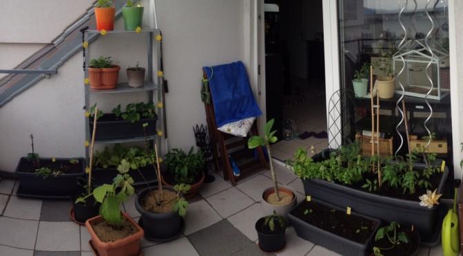 Aliciouslife: My Balcony Garden – Getting serious