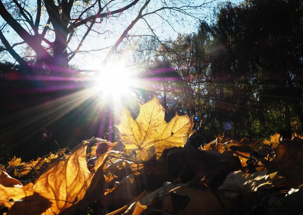 Burggarten autumn sun